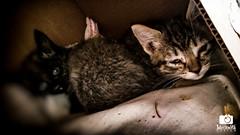 Morning kitties, Sisu and Sanni (Hirvimaki) Tags: cats kittens animals farmanimals