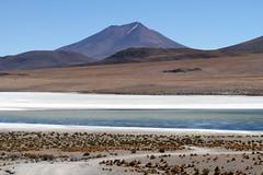 Bolivie 2017 (nouailleric) Tags: bolivie bolivia lagunacanapa laguna lagune routedesjoyaux latineamerica amériquelatine sudamerica southamerica sudlipez canon eos500d efs1022usm voyage travel andes altiplano