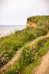 Holt-Sheringham 7th June 2018-5 (aljones27) Tags: sheringham norfolk coast coastal sea beach shingle coastline path coastpath plants