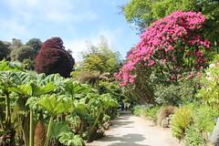 Gardens like Paradise: Glendurgan and Trebah (Christopher DunstanBurgh) Tags: glendurgan trebah helfordriver falmouth cornwall kernow garden garten jardin giardino paradise paradies