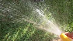 Refrescando a grama  //  Refreshing the grass (Eco.Natu) Tags: grama água sol verde amarelo luz sombra jardim grass water sun green yellow light shade garden