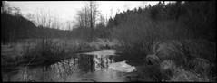 . (Der Ohlsen) Tags: silvercam pseudorama analog 35mm kb bw c41 kodakbw400cn schleswigholstein deutschland germany