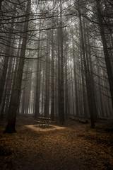 Picnic (Dusty Dog Imaging) Tags: picnic forest trees spooky fog foggy mist misty australia lonely barringtontopsnationalpark thefirs