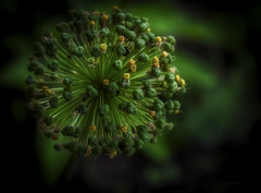 Flower ... (Julie Greg) Tags: flower nature garden park green colours fujifilm england kent