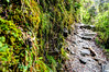 Pursue some path, however narrow and crooked (sakthi vinodhini) Tags: settlement annapurna nepal himalayas abc trek backpack mountains hills greenery ngc forest landscape mountain tree dark deep bamboo wet rainy grass rock wood creek hdr park trail soil moss