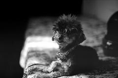 Nico (mavricich) Tags: dog perro film monocromo kodak spotmatic pentax mascota foto