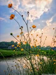 Ranunculus (iPhone Fotograaf) Tags: clouds evening landscape nature sun groningen sunset dutch sky iphone8plus