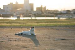 猫 (fumi*23) Tags: ilce7rm3 sony fe85mmf18 sel85f18 apsccrop katze neko gato cat chat feline animal a7r3 bokeh harbor port ねこ 猫 ソニー 港