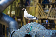 Animals. (ost_jean) Tags: animals oiseau vogel bird nikon d5200 7003000 mm f4563 ostjean explore