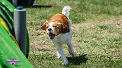 _DSC1068 (SeverX9) Tags: sony alpha 6500 70200gf4 dog run