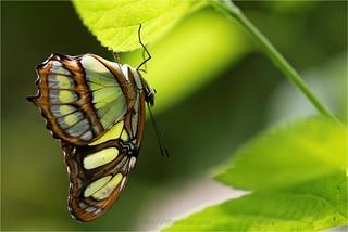 La Serre aux Papillons - Sanguinet - Landes