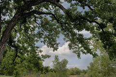 Deep shade (Rocky Pix) Tags: deepshade stvrain creek river water cottonwood shade pastoral goldenpondsparkrecreationarea longmont boulder county colorado rockies basinrockypixrockymountainpixw michel kiteleyf161200thsec35mm2470mm f28 f28g nikkor normalzoom handheld