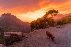 Evisa Corse (photoserge.com) Tags: corse landscape view sunset pig wildlife