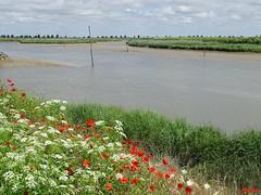 Bucolic ! (Armelle85) Tags: extérieur nature paysage eau fleuve fleurs flore arbre