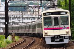 7803+7703 Test Train (R142A_) Tags: train railroad railway locomotive vehicle keio testtrain cloudy 試運転 京王