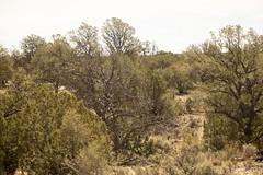 SedonaVacation_May2018-1745 (RobBixbyPhotography) Tags: arizona grandcanyon sedona vacation railroad tour train travle