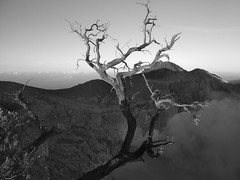 edward scissorshand (Elf-Y) Tags: crater kawahijen licin branches tree java banyuwangi volcano blackwhite indonesia mono