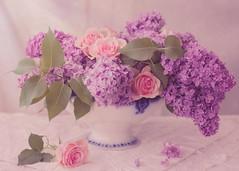 Lilac time (BirgittaSjostedt) Tags: lilac flower blossom rose garden summer beauty beauties pot old antique lace tablecloth texture birgittasjostedt
