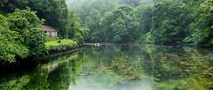 Quiet Backwater (Peter Quinn1) Tags: pontpill cornwall fowey swan heron tranquility quietbackwater creek riverfowey pont tidalcreek mist mistymorning nationaltrust