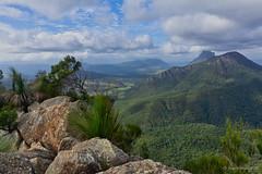 Mts Lindesay & Ernest from SE Ridge (NettyA) Tags: australia mtbarney mtbarneynationalpark qld queensland seridge bushwalking seqld scenicrim mtlindesay mternest grasstree xanthorrhoea