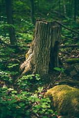 (001FJ) Tags: 001fj nikon d700 50mm f14g silver creek conservation area nature