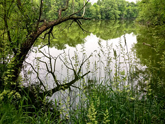 The view from the trail... (DAJanzen) Tags: running aroundthelake 5k lake forest green alongthetrail woods humid mosquitos lateafternoon overcast almostsummer beautifulscene motivating applewatch gettinginshape iphone6splus