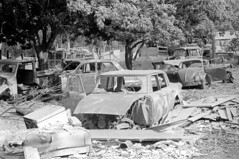 041269 13 (ndpa / s. lundeen, archivist) Tags: nick dewolf nickdewolf blackwhite photographbynickdewolf bw 1969 1960s 35mm film monochrome blackandwhite april usvi virginislands usvirginislands stthomas caribbean junk junkyard cars car vehicle vehicles automobile automobiles abandoned junkers cargraveyard vw volkswagen bug beetle carparts oldcars