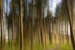Dancing trees (Jan van der Wolf) Tags: map184262v trees boom bomen motion blur movement beweging nature dancing dansen natuur
