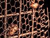 ..feel like hanging with me? (dawn.tranter) Tags: hff fencedfriday dawntranter beetle monotone monochrome macro closeup circada circadashell light canon hanging fence wire