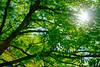 DSC07568 (engine9.ru) Tags: растения рябина солнце архангельск