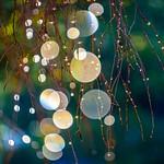 Dew Stars thumbnail