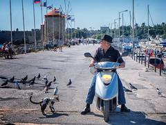 Man on Vespa (mirsavio) Tags: greece rhodes fujifilm xt20 street promenade pigeons cats vespa man