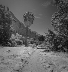 Hiking at Whitewater Preserve (jtgfoto) Tags: approved whitewaterpreserve coachellavalley california nature outdoors sonyimages sonyalpha desert sky palmsprings adventure travel hiking landscape palmtree tree trail monochrome bw blackandwhite mountain whitewaterriver