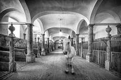 Encounter (Aliy) Tags: horse whitehorse stable stables architecture atmosphere royalstable royalstables arches arch mono blackandwhite blackwhite chiaroscuro light shadow christiansborg palace copenhagen denmark