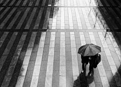 Rainy Day (Leonegraph) Tags: umbrella rain leonegraph streetphotographer streetphotography story urban spontan spontanious candid unposed human street 2018 europe germany deutschland city stadt monochrome bw blanco negro bn sw schwarz weis black white panasonicgx80 panasonic1235mmf28 mft microfourthirds hannover hanover