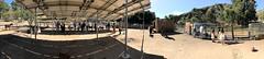 017 Reptacular Ranch Petting Zoo (saschmitz_earthlink_net) Tags: 2018 california angelesnationalforest losangelescounty sylmar reptacularranch kevinjessicawedding