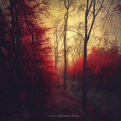 ruby red forest (Dyrk.Wyst) Tags: deutschland nebel regen wald wuppertal fog forest fresh red haze labndscape leaves mood outdoor rain woodland moody ruby painterly atmosphere textures