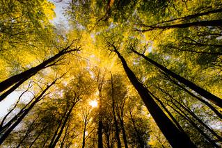 Ein Blätterdach voll Sonne