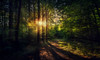 im Wald (Chrisnaton) Tags: forest wood trees path trail nature outdoor sunset sunlight eveningmood green wald natur