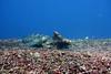 Turtle 26 (2) (Petter Thorden) Tags: diving indonesia gili trawangan underwater turtle