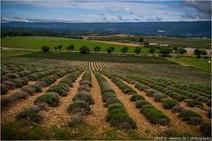 _lavendel (l--o-o--kin thru) Tags: drôme lavendel lavende