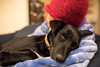 Sleepy Puppy (Eduardo_il_Magnifico) Tags: puppy sleep sleeping sleepy tired snooze rest dog animal pet kelpie evening late pupper sigma24mmf14 nikond750