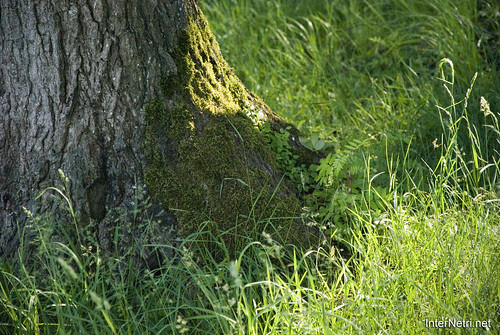 Шацький Національний Природний Парк Озеро Пісочне Стовбури дерев InterNetri  Ukraine 386