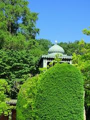 Overgrown (The-Beauty-Of-Nature) Tags: summer june juni nature germany deutschland plants pflanzen green grün lush sunny sun sonne sonnig warm stuttgart wilhelma botanic garden botanischer garten zoo