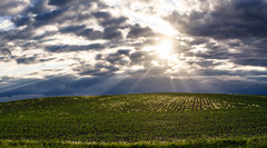Sunbeams dancing over a spring field. (CanonDLee) Tags: agriculture cloud clouds country farm field goodhue landscape mn minnesota panorama plants rows rural sky spring sun sunbeams sunset welch