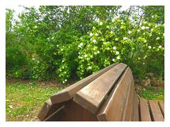 Banco y flores. (Los colores del Barbanza) Tags: banco flores verde marron parque de san roque ribeira barbanza coruña galicia españa spain bench flowers green brown park banc fleurs vert brun parc