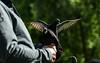 Stackable pigeons (PChamaeleoMH) Tags: birds centrallondon london pigeons stjamesspark