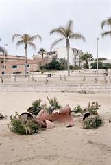 Untitled (Florian Thein) Tags: palmen palms pflanzen plant domestiziert blumentopf zerbrochen strand beach sand marinadiragusa sicilia sizilien italy italien film analog 35mm canonf1 kodakportra
