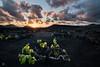 Geria (Lanzarote) (iurgi.) Tags: atardecerplayageria lanzarote uva viñedos parra iurgi inda vine luz light volcano volcan isla island wine vino