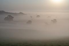 Magical (jactoll) Tags: weethley warwickshire summer sunrise mist misty mistytrees trees light landscape sony a7iii 70200mmf4 jactoll